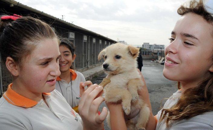 Bin 500 sokak hayvanının artık sıcak yuvası var
