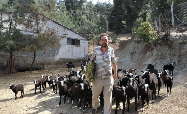 Bu koyunu almak isteyenler 5 ay sıra bekliyor