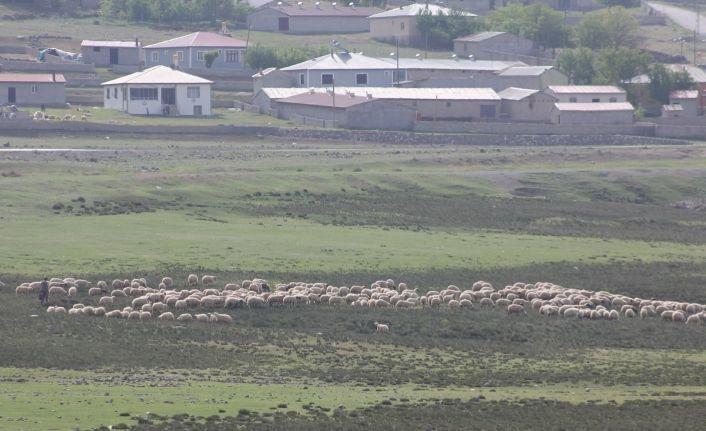Erzincan'da meralar küçükbaş hayvanlarla şenlendi