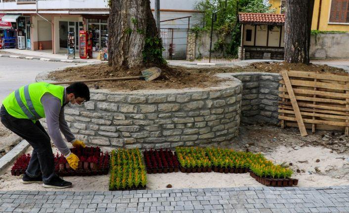 Safranbolu Belediyesi'nin yetiştirdiği çiçekler toprakla buluştu