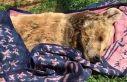Türkiye'nin en yaşlı ayısı 'Meyvan' öldü