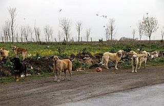 Büyükçekmece Belediyesi, sokak hayvanlarını unutmadı
