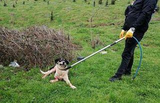 Koyunlarını korumak isterken sokak köpeğini tüfekle...