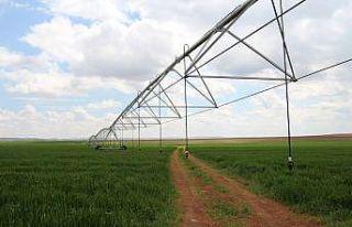 Şanlıurfalı çiftçi 'pivot' sulamayla yüzde...