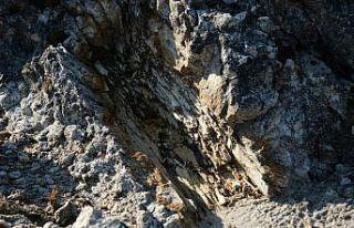 (Özel) 25 milyon yıllık fosil ağaç ormanı ilgi...