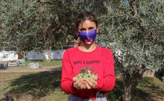 Özel öğrencilerden zeytin hasadı