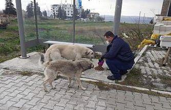 Lapseki'de sokak hayvanları unutulmadı