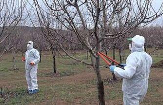 """Elazığ'da yaşlıların """"bahçe ve arılarının"""" bakımı yapıldı"""