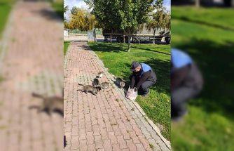 Polisler, sokakta yaşayan sahipsiz kedilere yiyecek bıraktı