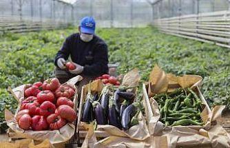 Ata tohumlarından üretilen 3 milyon fide vatandaşlarla buluştu