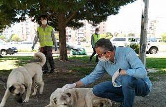 Salgında sokak hayvanlarına 2 bin 100 kilo mama desteği