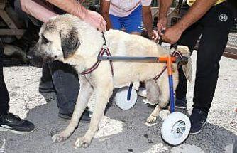 Gölbaşı Belediyesinden engelli sokak hayvanlarına yaşam desteği
