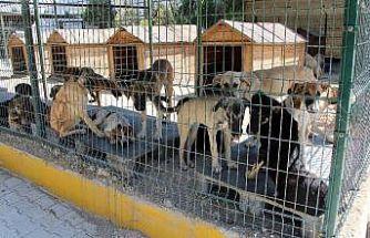 Hayvan barınağında işkence iddialarına yalanlama
