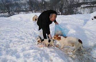 Cumayeri'de sokak hayvanları için mama bırakıldı