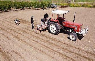 Tarsus'ta yerli tohum ekimi artıyor