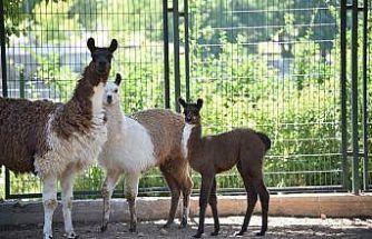 Malatya Hayvanat Bahçesi ziyarete açıldı