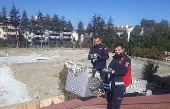 Çatıda mahsur kalan yavru kedileri itfaiye kurtardı