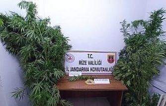 Rize'de iş yerine uyuşturucu baskını