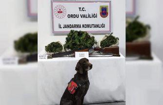Ünye'de uyuşturucu operasyonu: 12 kilo kubar esrar ele geçirildi