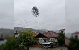 Amasya'da sığırcık kuşlarının dansı