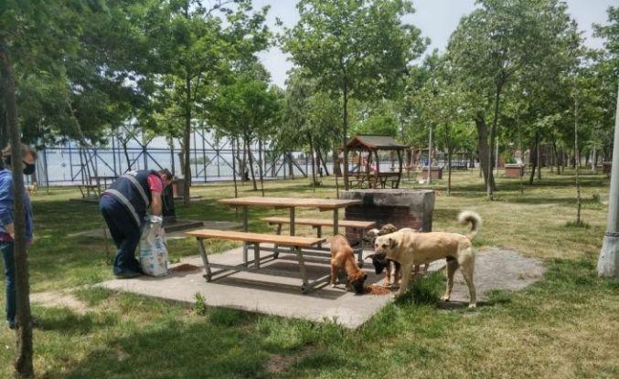 Körfez Belediyesi'nden sokak hayvanlarına su ve mama
