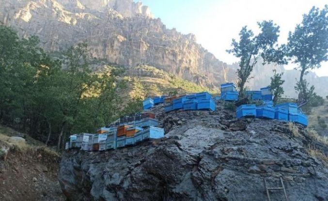 Arılarını ayılardan korumak için kovanları kayanın üzerine yerleştirdiler